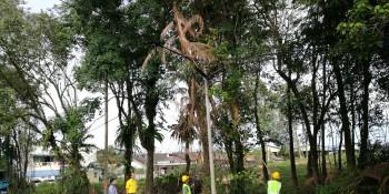 砂拉越人民联合党公共投诉局主任叶耀星偕同市议员汪的材在五哩八港路第三巷视察砍树工作。